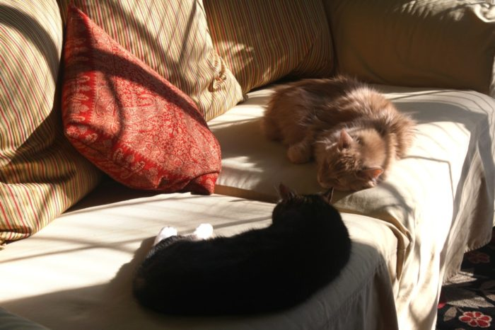 This is how our Kittiez chill while we're doing school . . . they love the laid back lifestyle!